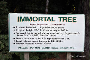 Immortal Tree sign