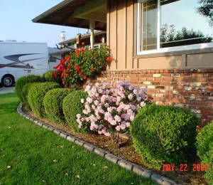 Front Yard - Mini Rose Bush - Photo 6